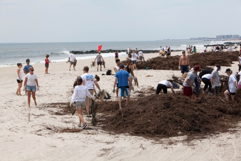 Recap: Surfrider NYC + Barefoot Wine – Dune Creation Project August 10, 2013